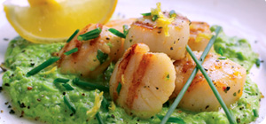 Seared scallops with minted pea puree